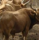PROGEVAL: Renforcement de capacités sur la méthode des 12 mo et l'utilisation des fiches pour l'enquête rétrospective et le suivi des troupeaux