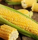 Le CORAF outille les acteurs du maillon commercialisation de la filière maïs de l'espace UEMOA