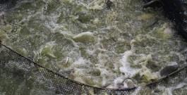 Du poste d'Assistant de bureau, à la pisciculture