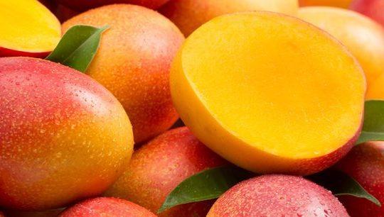 Les taux d'infestation des mouches de fruits en baisse dans des vergers au Ghana et au Bénin