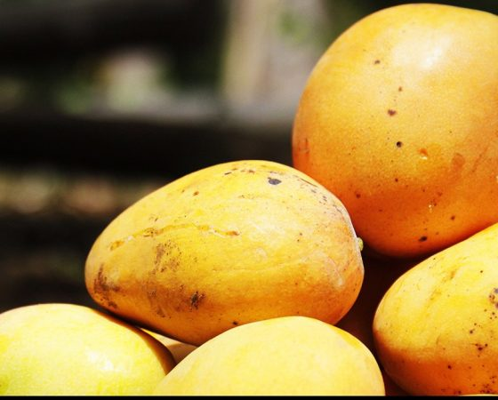 Mango Exports on the Rise Again in Burkina Faso as a Result of Research