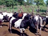 2ème Assemblée Générale du Point Focal Sous-Régional pour la gestion des ressources génétiques animales en Afrique de l'Ouest
