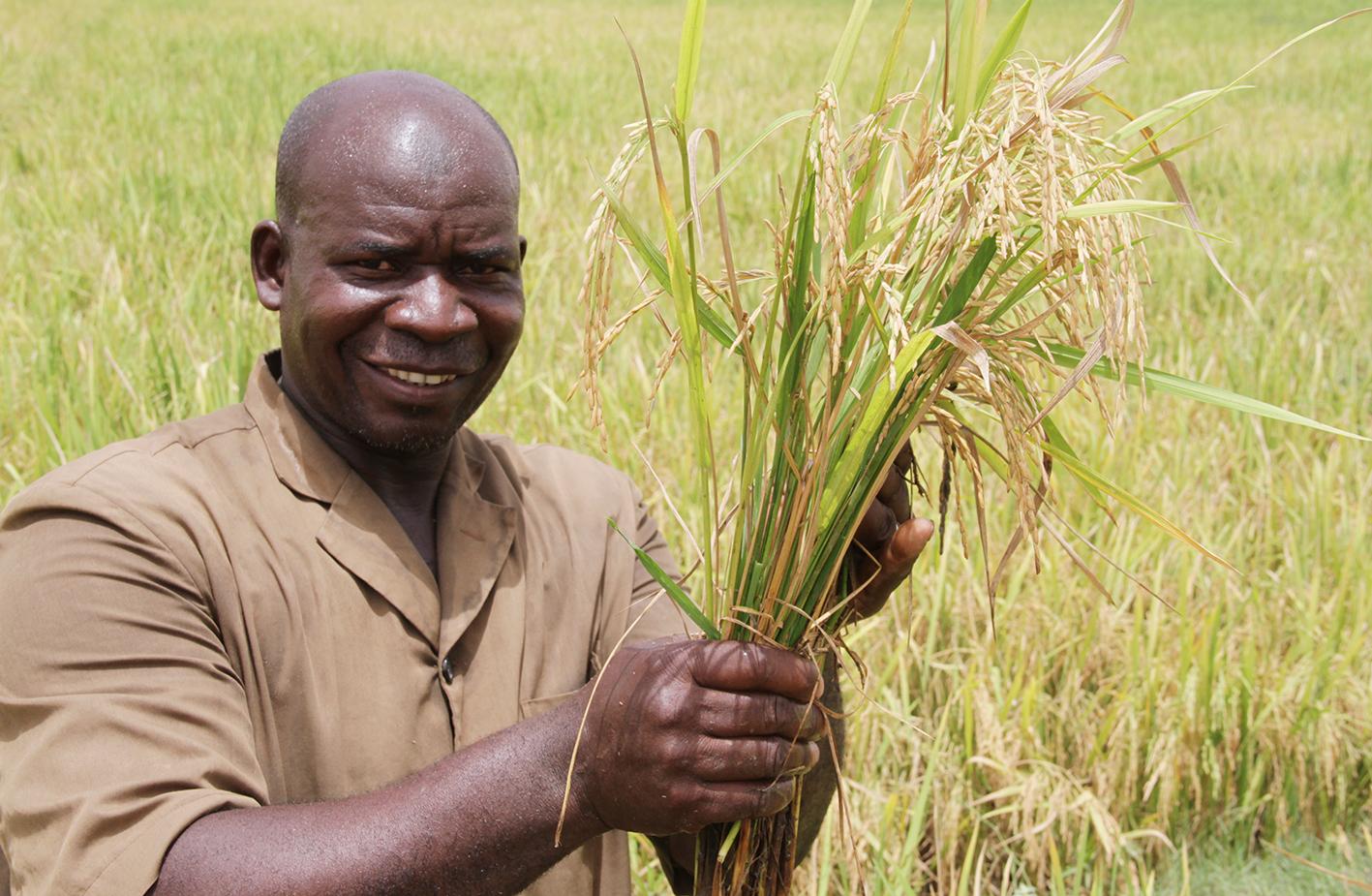 ''Le SRI présente de nombreux avantages par rapport à nos méthodes de culture traditionnelles. Il nécessite moins de semences et les rendements sont plus élevés avec ce système qui utilise moins d'eau en contre saison'' renseigne Assie Togola, un autre utilisateur du SRI.