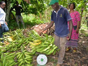banane-c-a