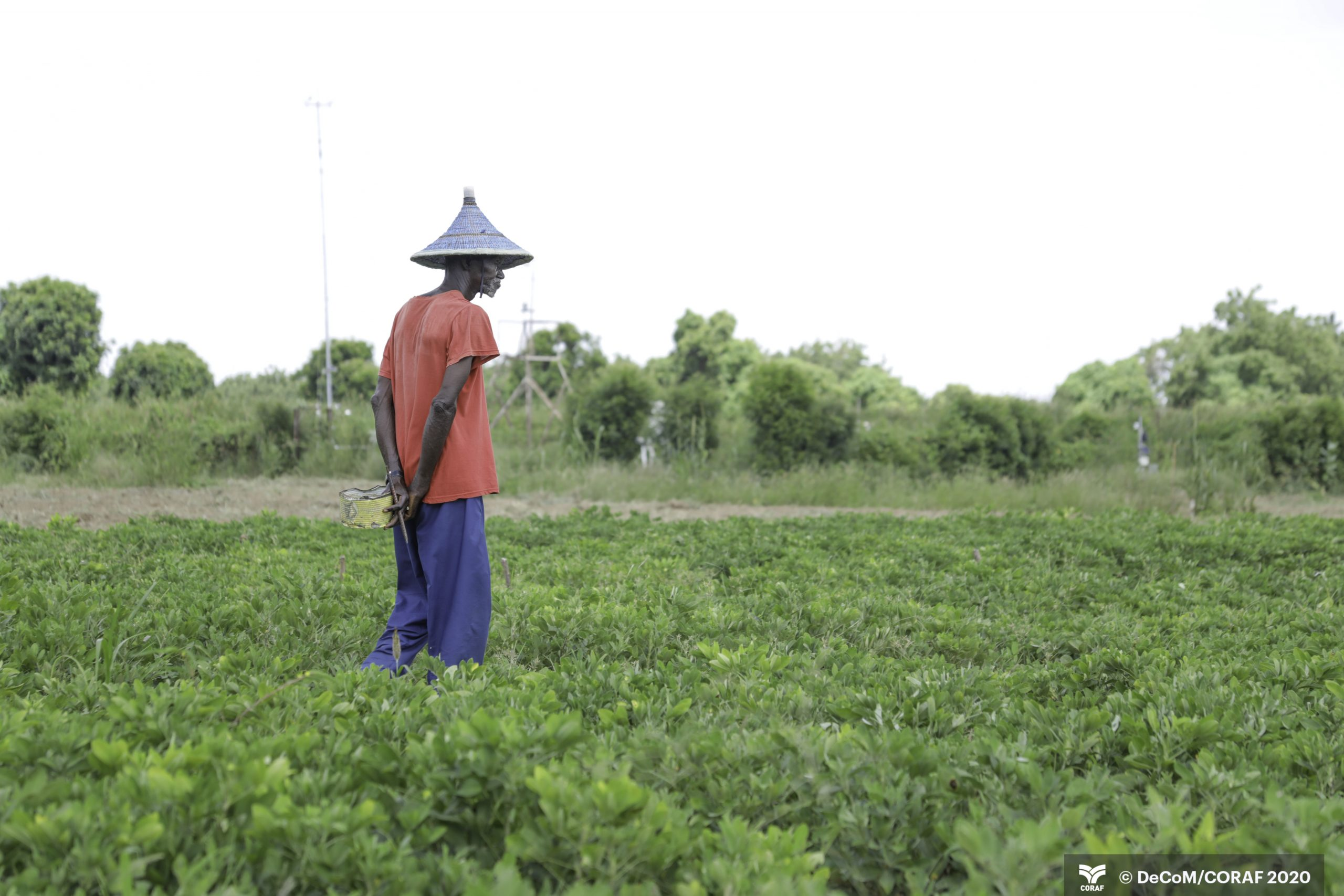 A picture of a farmer in his field